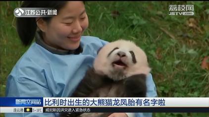 我有名字啦!比利时大熊猫双胞胎正式取名,网络投票这两个名字胜出