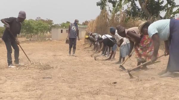 """为应对干旱,津巴布韦引入""""耕作新理念"""""""