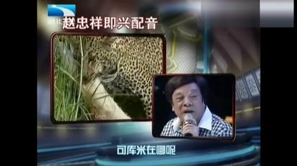 赵忠祥节目现场即兴为《动物世界》配音,堪称完美!