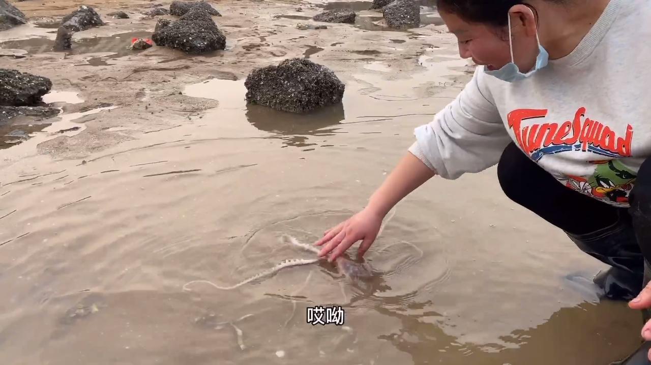 玲子赶海碰到大货了,捉了两只大八爪鱼,可把玲子高兴疯了