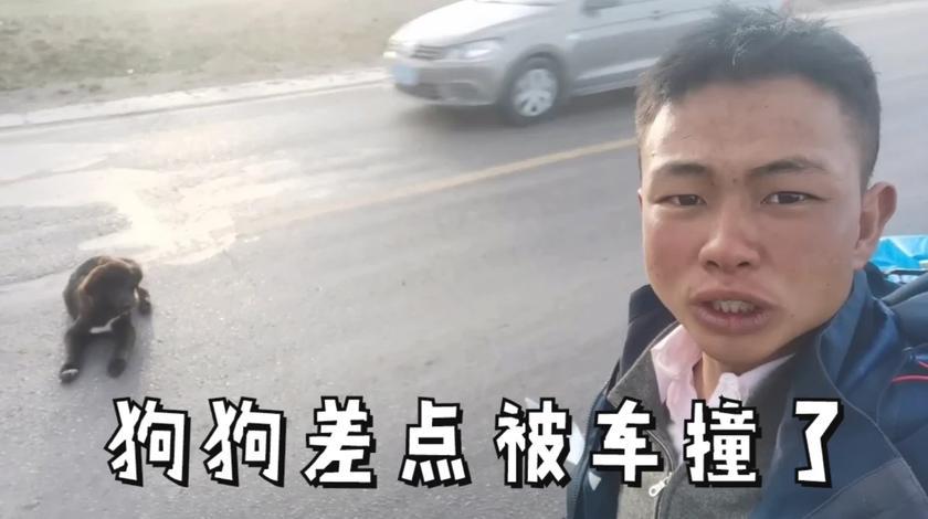 徒步西藏,一只流浪狗小藏獒跟着我赶不走,在公路上差点被车撞了