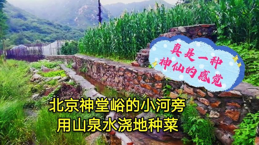 北京神堂峪的小河,用山泉水浇地种菜,真是一种神仙的感觉!