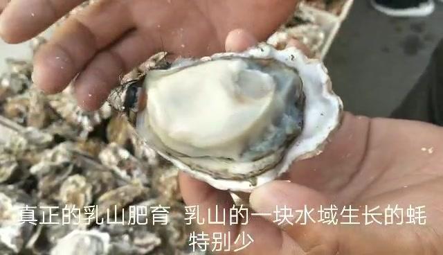 鲜活大虾开始上市,生蚝最合适又肥又便宜,渤海湾本地海鲜太少了