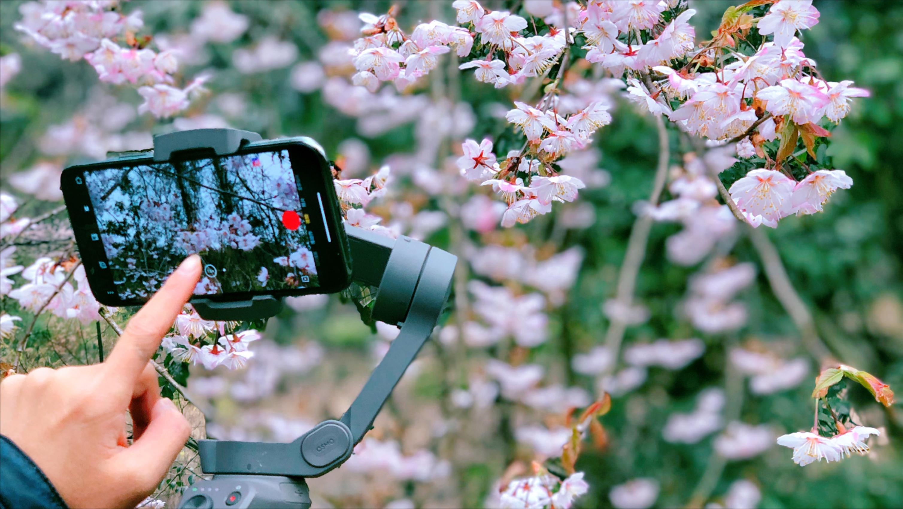 超好用的3个手机拍摄技巧!在家也能拍大片