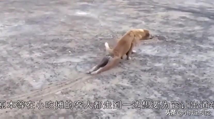 狗狗拖着残疾的双腿爬行,下一秒画风大变,演员的自我修养?
