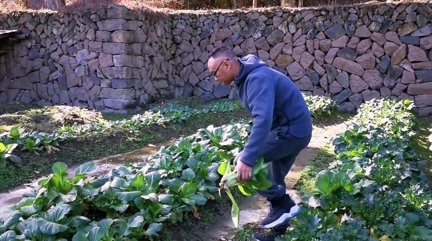农村老爸怕城里菜太贵,叫儿子不远千里从乡下带青菜回广州