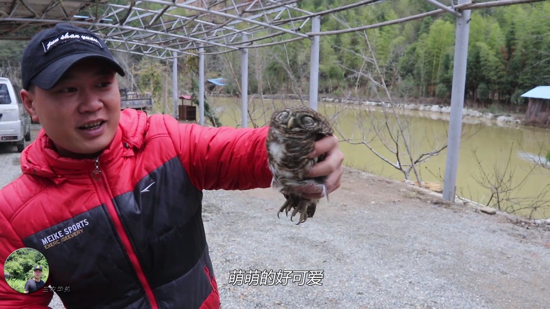 华弟朋友到来迎接后,在农场发现二级保护动物,华弟看后将其放生