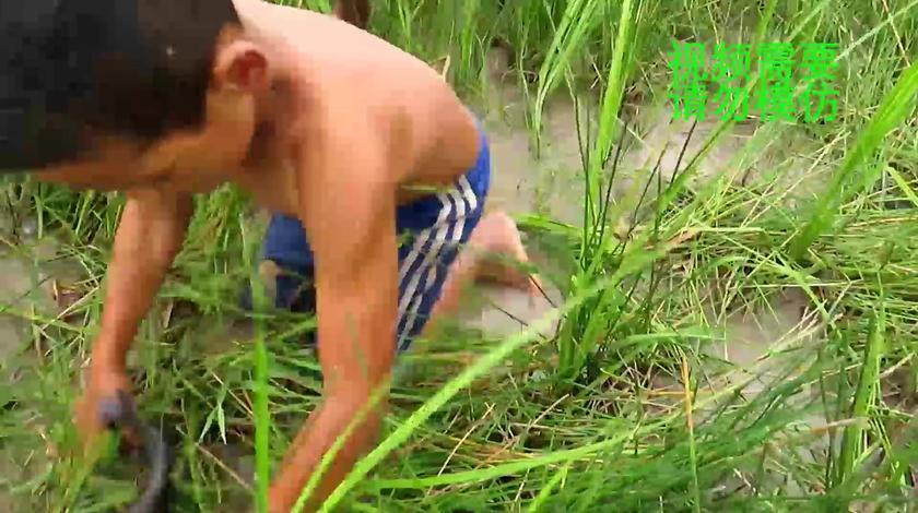 户外捕鱼:农村小孩用竹筐捕鱼,真是个捕鱼神器,大鲶鱼都能找到