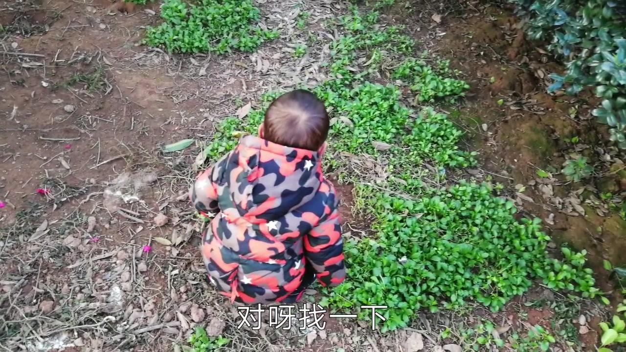 农村生活就是有乐趣,萌娃有模有样蹲着找鸭蛋,实在是太可爱了
